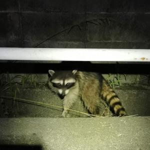 いつぞや近所の森で見た特定外来生物がこんな姿に?
