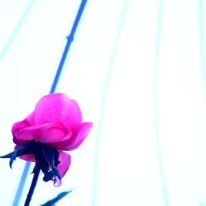 〝 花の城  〟 花、撮って来た☆彡(●´ω`●)/