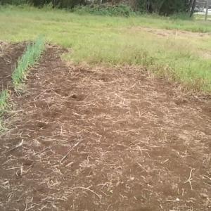 ニンニク植え付けと草取り 181015 菜園