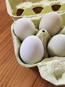 みどりいろの卵