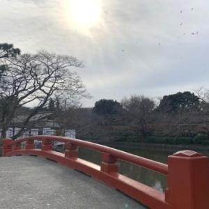 赤絵の実験 & 冬の鶴岡八幡宮