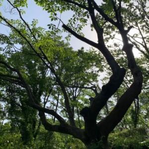 5月の生徒さんの作品 & 舞岡公園
