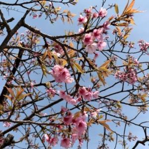 アルハンブラ宮殿の壁面タイル & 鶴岡八幡宮の初春