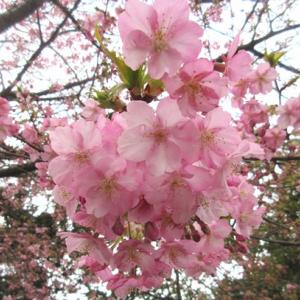 元気をあげよう!大皿 & 江の島の春