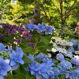 6月の生徒さんの作品のご紹介 & 紫陽花の長谷寺