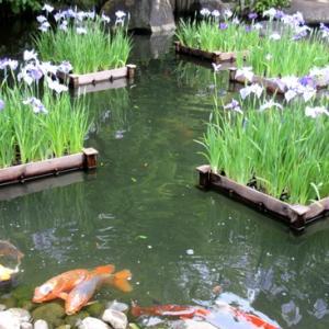 帽子をかぶる人の花瓶 & 長谷寺の紫陽花