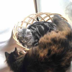 猫のストレス対策(サプリなど)〜火災報知器点検や雑排水管清掃や〜