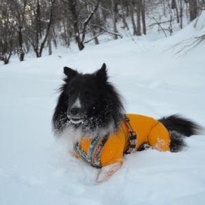 今年最後の雪遊び