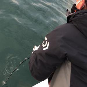 釣り納め メンバー釣果 鰤‼️