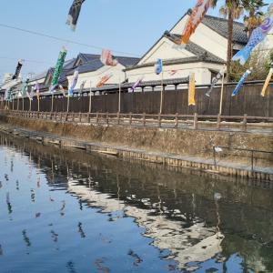 巴波川に鯉のぼりが游ぎ始めましたヨォ~