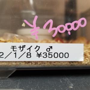 セール特価紹介 その参!