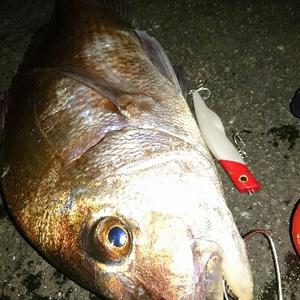 今年一番の衝撃釣果ショア真鯛60ゲットw 今年も一年お世話になりましたw