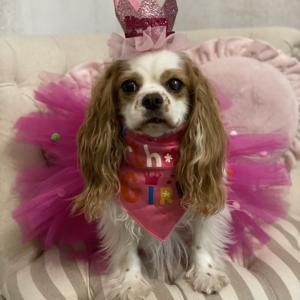 幸せ報告♪ フェリシア、1周年おめでとう!