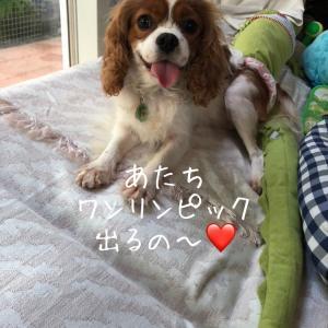 """""""【ケア中リッツォ】ワンリンピック目指して"""""""