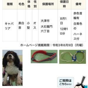 【保護犬情報】滋賀県大津市 トライ 男の子 【拡散歓迎】