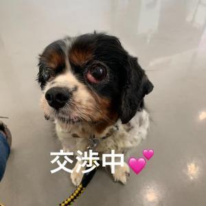 """鳥取の収容犬、続報 """"可愛いジャンボちゃん"""""""