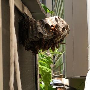 室外機の裏にハチの巣を発見