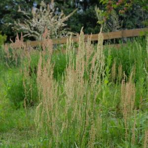 雑草も楽しむ庭