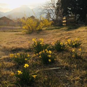 菰野も春ですね