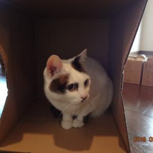 727・箱の中で目が光る猫