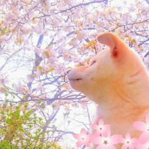 「桜」と「そら」