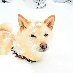 初めてなのに大雪警報!