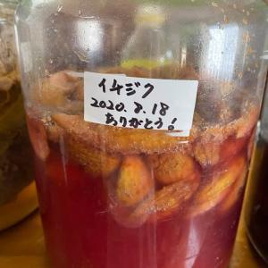イチジク発酵エキス出来上がりました。