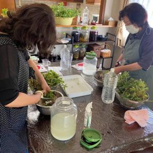 マンジェリコン、ヨモギ発酵エキス教室開催しました。
