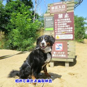 初めての鳥取砂丘