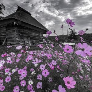 茅葺小屋の秋