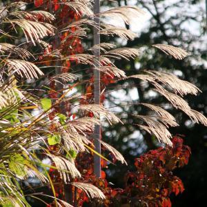 ドッグラン雲谷で秋の爽やかランラン