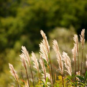 食欲の秋・収穫の秋を満喫☆あおもりマルシェ