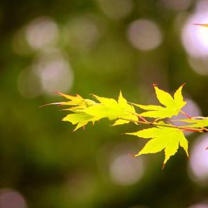 梅雨の晴れ間の高原ランラン☆ドッグラン雲谷