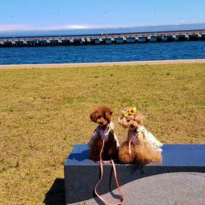 平日の海風散歩
