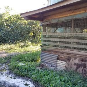 台風が過ぎた鶏小屋は…