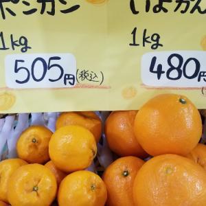 季節の 果物