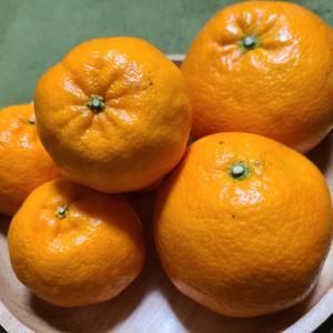旬の 果物