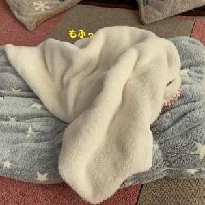 洗い立ての毛布