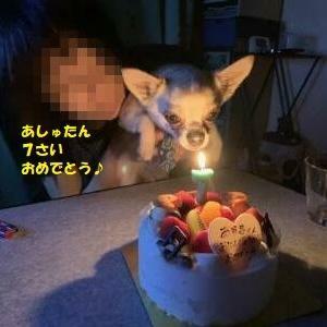 あしゅたんのお誕生日とステキなさくらちゃん