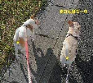 秋晴れ散歩♪