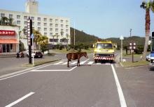 1990年春・九州一周の旅【12】都井岬と日南海岸