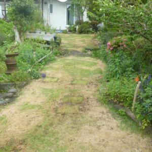 我が家の芝生    17日