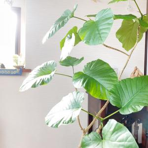 観葉植物がすぐ枯れる家の特徴!!