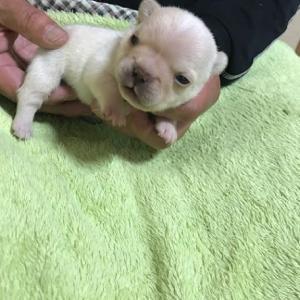 **あずきの赤ちゃん お目目が開きました♪**