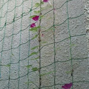 9月 5日(木)の歩数