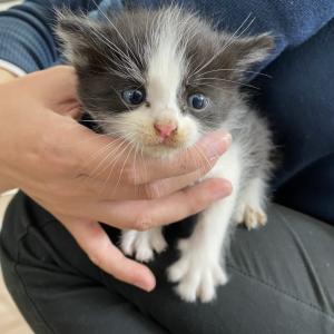 --緊急--子猫を保護しました