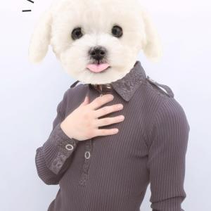 吾輩は犬である。