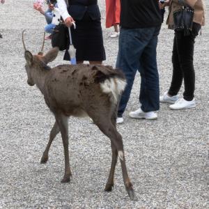 ☆ 鹿 鹿 鹿