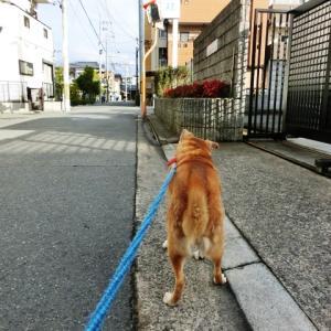 ○ 200/11/28(土)のウォーク&乗り鉄