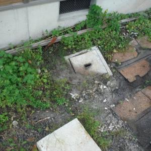 台風で被害を受けた軒天 ~  汚水マス取替。